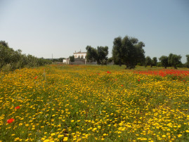 Masseria Pugliese with pool - Fire Apartment