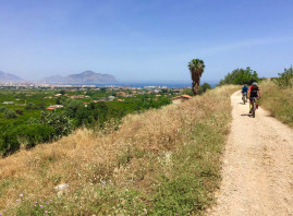Bike tour from Palermo's center to Ciaculli's citrus groves and old beams