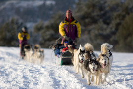 Sleddog experience Sestriere with guide and lunch