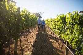 Il grande vino bianco piemontese: tour della tenuta, vigneti e wine tasting di Erbaluce