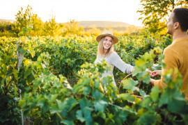 Grape's Road: cooking class e wine trekking in Roero
