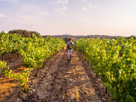 Monferrato guided wine trail: vineyards hiking and lunch in a holiday farm
