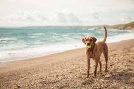 Dog-friendly beaches in Liguria