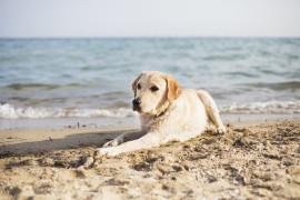 In spiaggia con il vostro amico peloso